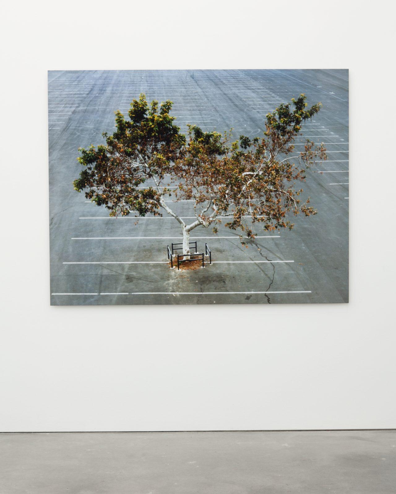 Joel Tauber, My lonley tree (2006)